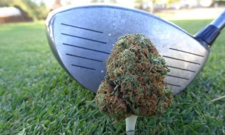 One in seven Canadian golfers say they plan to smoke marijuana on a golf course.