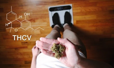 "THCV – The Compound That Curbs The Munchies, ""skinny pot"" or the ""sports car of weed."""