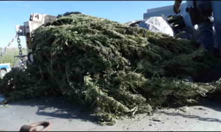 Central Nevada Grow Operation Busted. Authorities Say Value of Crop Is $US20 Million