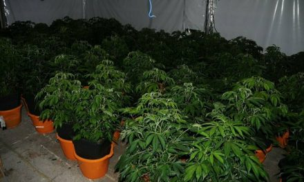 Irish Police Seize 800+ Plants in Raids