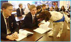 Sniffer Dogs Can Now Be Used In South Australian Schools