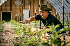 Jim Belushi wants to bring Blues Brothers weed business to Illinois