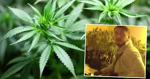 UK: Welsh Police Bust Albanians On The Job In Swansea Valley Grow House