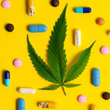 Article:  CANNABIS INSTEAD OF POLYPHARMACY?