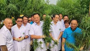 First Medical Cannabis Clinic Opens In Northern Thailand