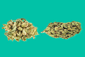 There is no difference between the effects of indica and sativa marijuana strains, scientists say