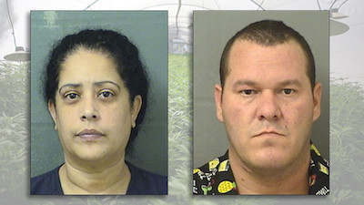 Florida: Nearly $1M worth of marijuana seized from home in Loxahatchee