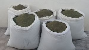 Turkey: 300 Kg Weed Seized in South East