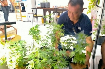 Spanish man arrested in Bangkok for allegedly growing marijuana plants