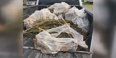 12 Trash Bags Of Weed Found In Creek
