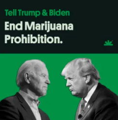 NORML Publishes Open Letter To Presidential Candidates