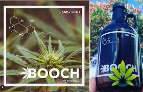 Cannabis Global Introduces 'Hemp & Booch' Super Premium Kombucha
