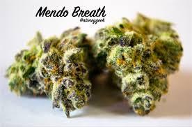 Strain Review: Mendo Breath Is a Taste of the Emerald Triangle