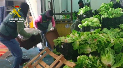 Spain 155kg of marijuana and 60kg of hash found inside vegetable pallets