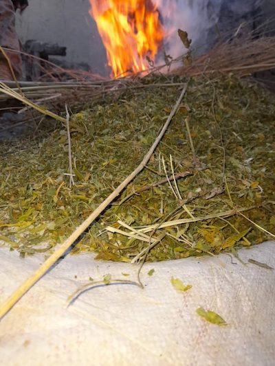 Afghanistan: Officials Torch 510kgs Hashish in Logar