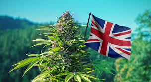 Investment Week Article:  Planting the buds of growth: Why the UK cannabis industry is a viable investment opportunity