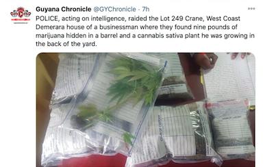 Weed Bust Guyana