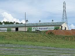 Virginia: $250,000 worth of hemp stolen from Christiansburg farm