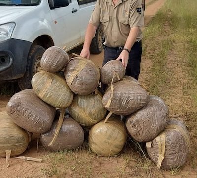 South Africa: ACSU and cops bust 4 near Ermelo for dagga worth about R500 000