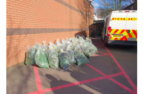 UK:  Huge Walsall cannabis factory worth £650k raided by police