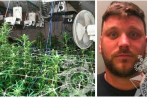 UK – Wales: Inside jailed Cefn Fforest drug dealer's cannabis factory