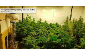 Spain :Mijas mother and son arrested for setting up a weed plantation in their basement