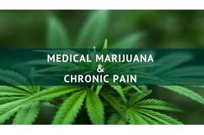 Best Marijuana Strains For Effective Pain Management