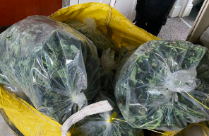 UK: Coventry Police Bust Grow House Only To Find An Even Bigger One Next Door
