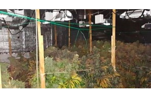 Ireland: Search of Roscommon grow house nets cannabis worth €124,000