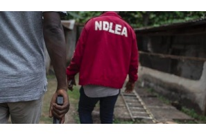 NDLEA Arrests Drug Baron, Recovers 100 Bags of Indian Hemp