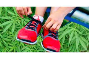 Article: Forget the 'lazy stoner': Marijuana users don't exercise any less