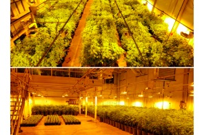 Canada – ON: Thousands' of cannabis plants seized in Tillsonburg drug raid:
