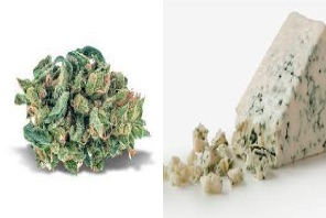 Why Colorado Tokers Love Blue Cheese