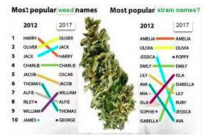 Strain Names Should Mean Something to Consumers