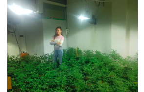 The Jakarta Post : Farming pot abroad: The Indonesians living overseas as marijuana farmers