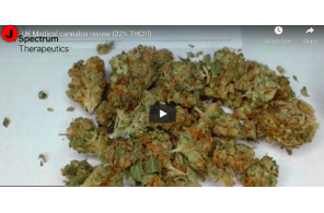 UK Medical cannabis review (22% THC!!!)