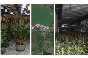 UK: Burglary tip-off unearths £1.38m cannabis 'factory'